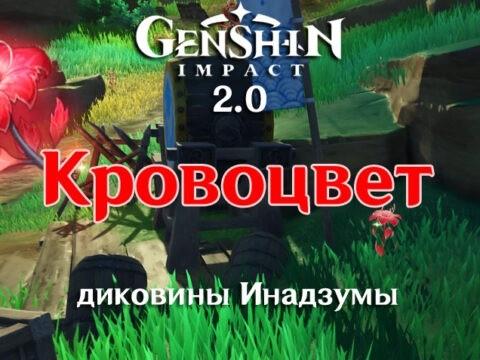 Кровоцвет в Genshin Impact 2.0
